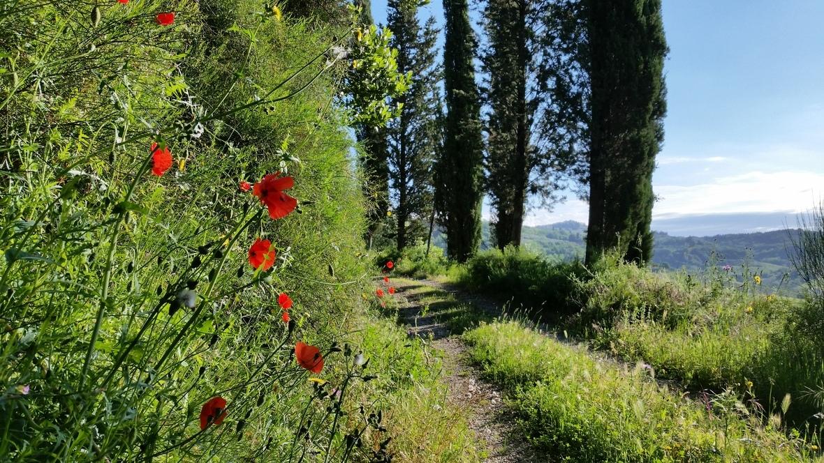 TuscanRoad