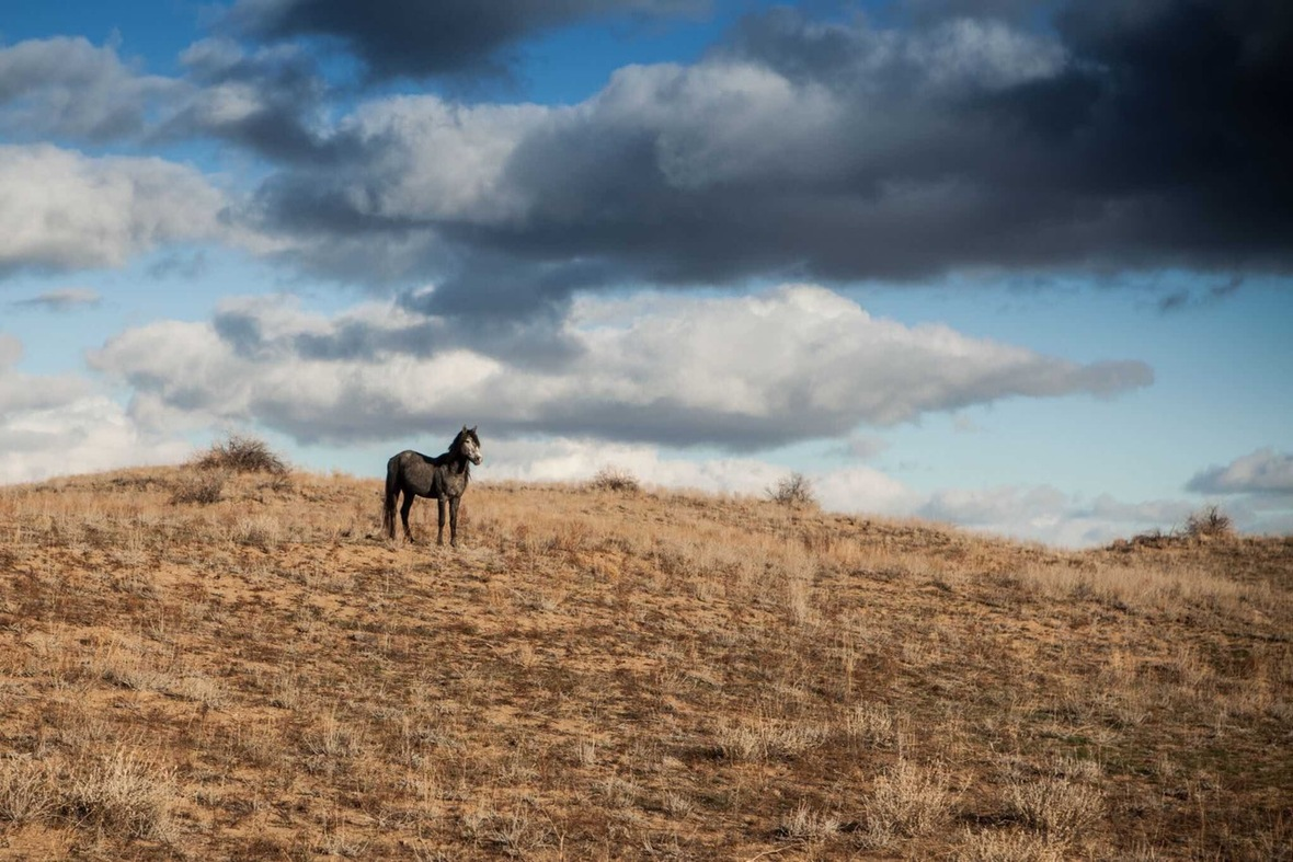 cheval steppes kazakhstan