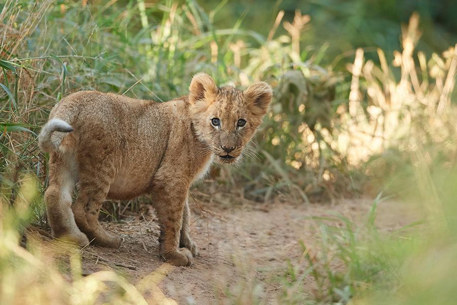 Suedafrika 2019 Katzen usw DD5 4798
