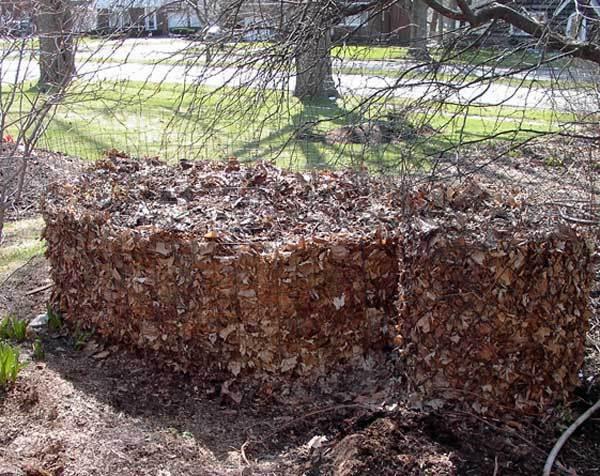 large-leaf-barrel-large