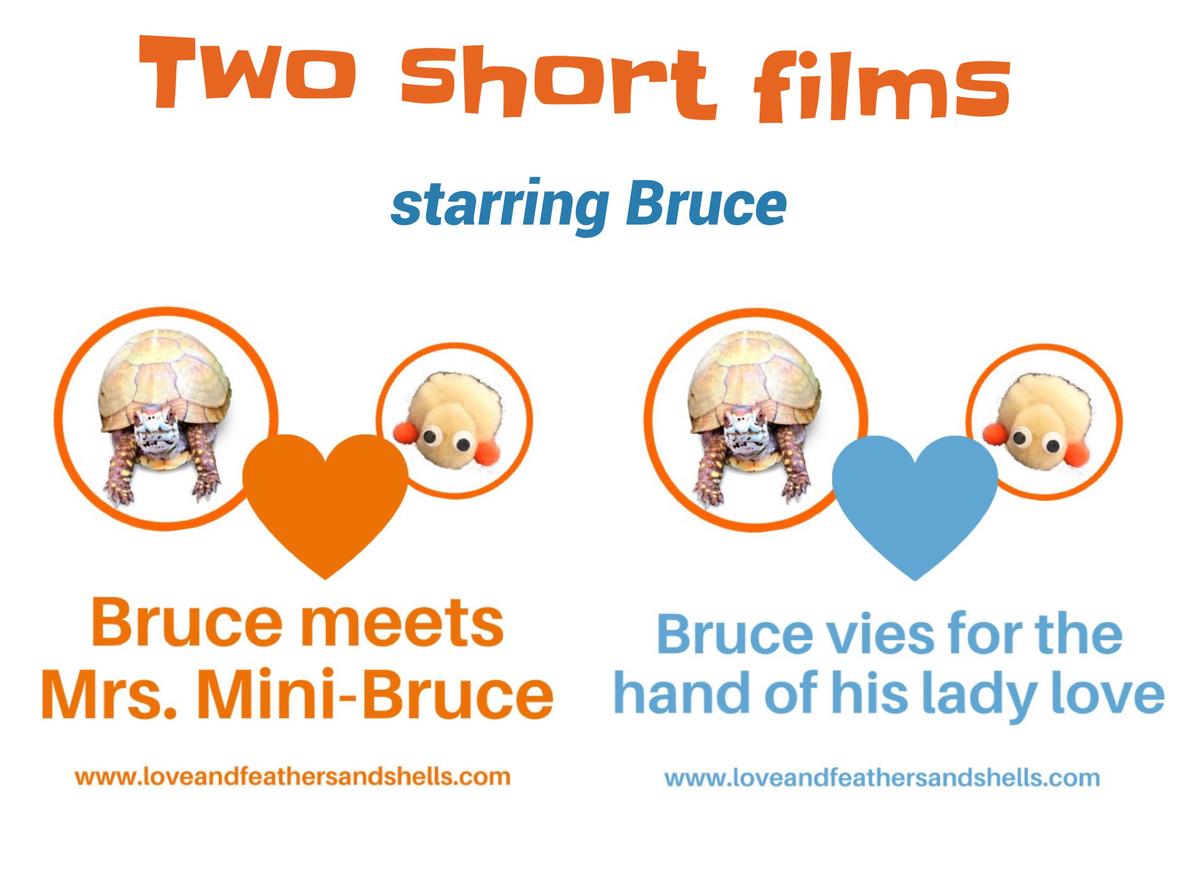 2ShortFilms Bruce