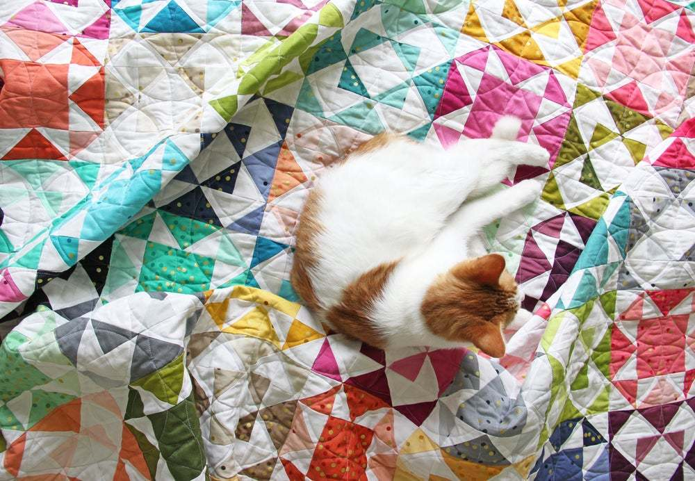 naughty cat on quilt 2