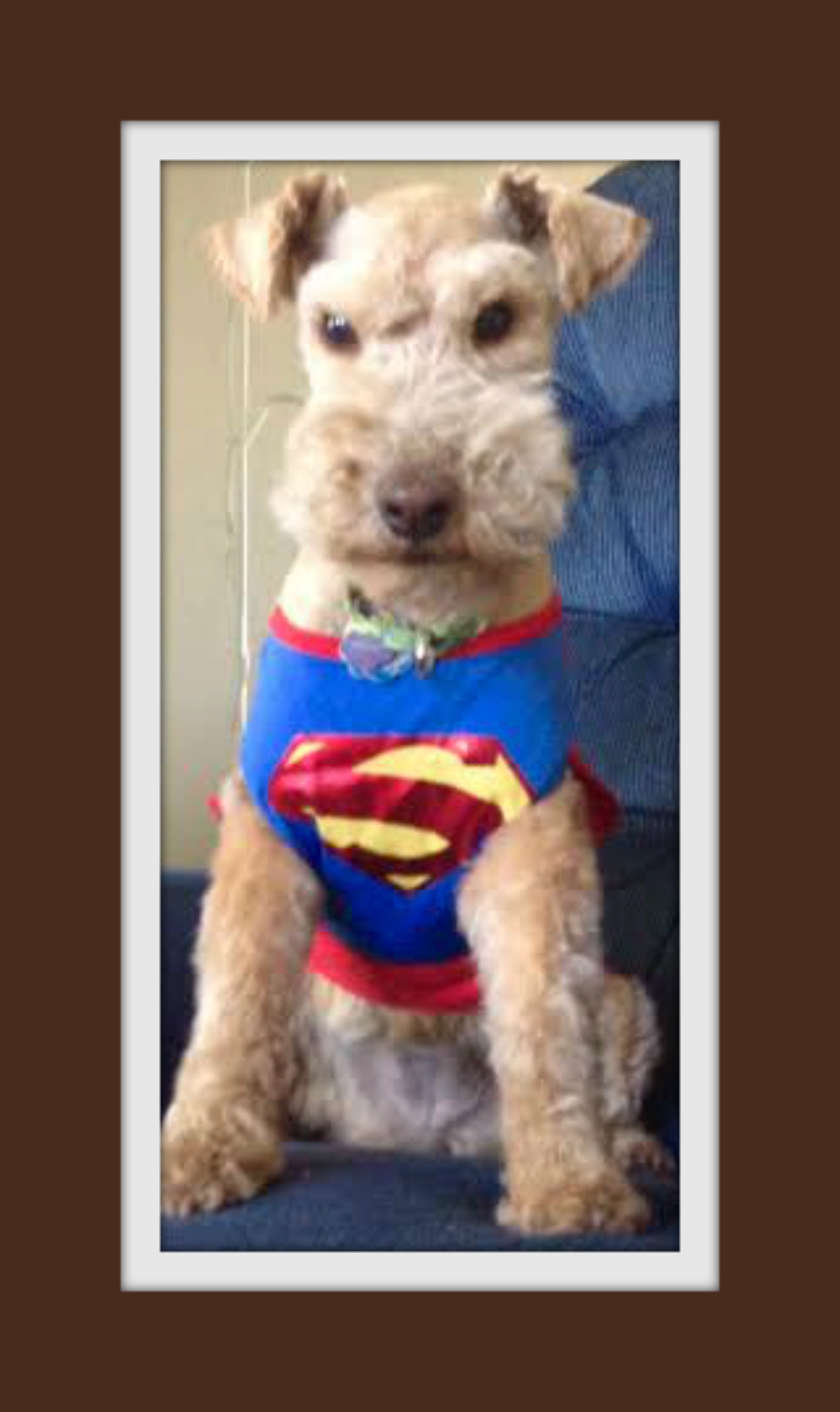 Superterrier-A