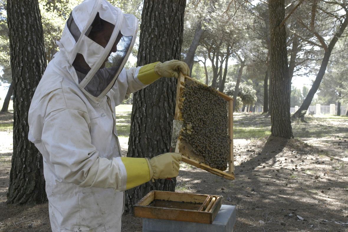 1-abeille