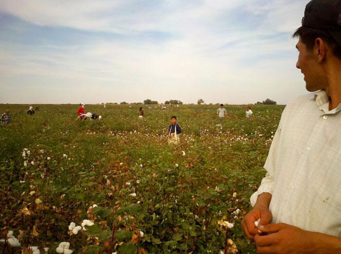 2012 Uzbekistan cotton 0