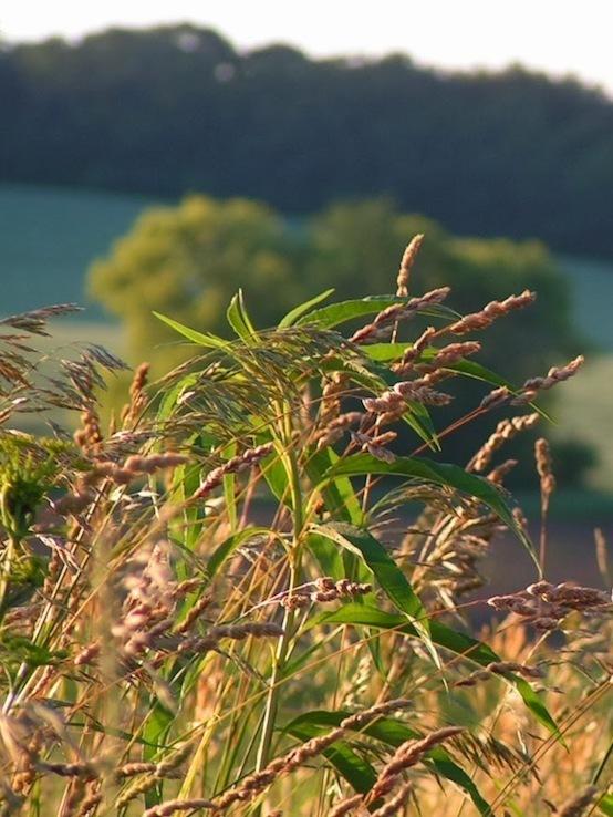 NO 2006 village site cropped vert 159-554