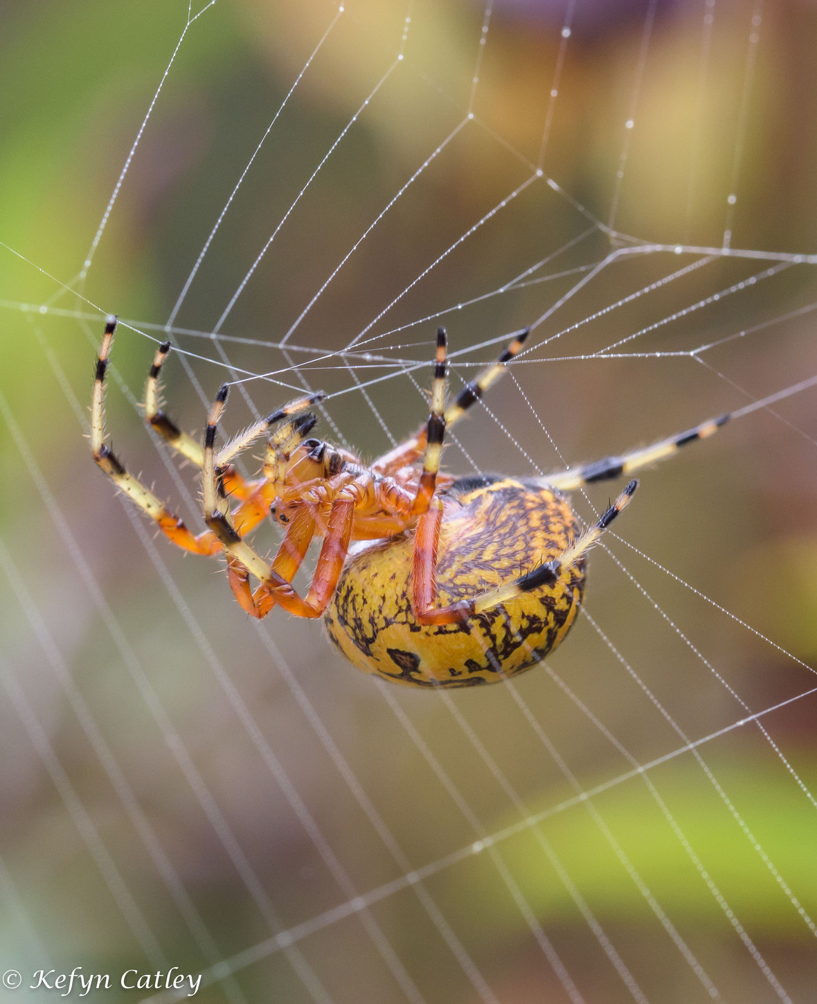 Catley Eagle Hill spider 1