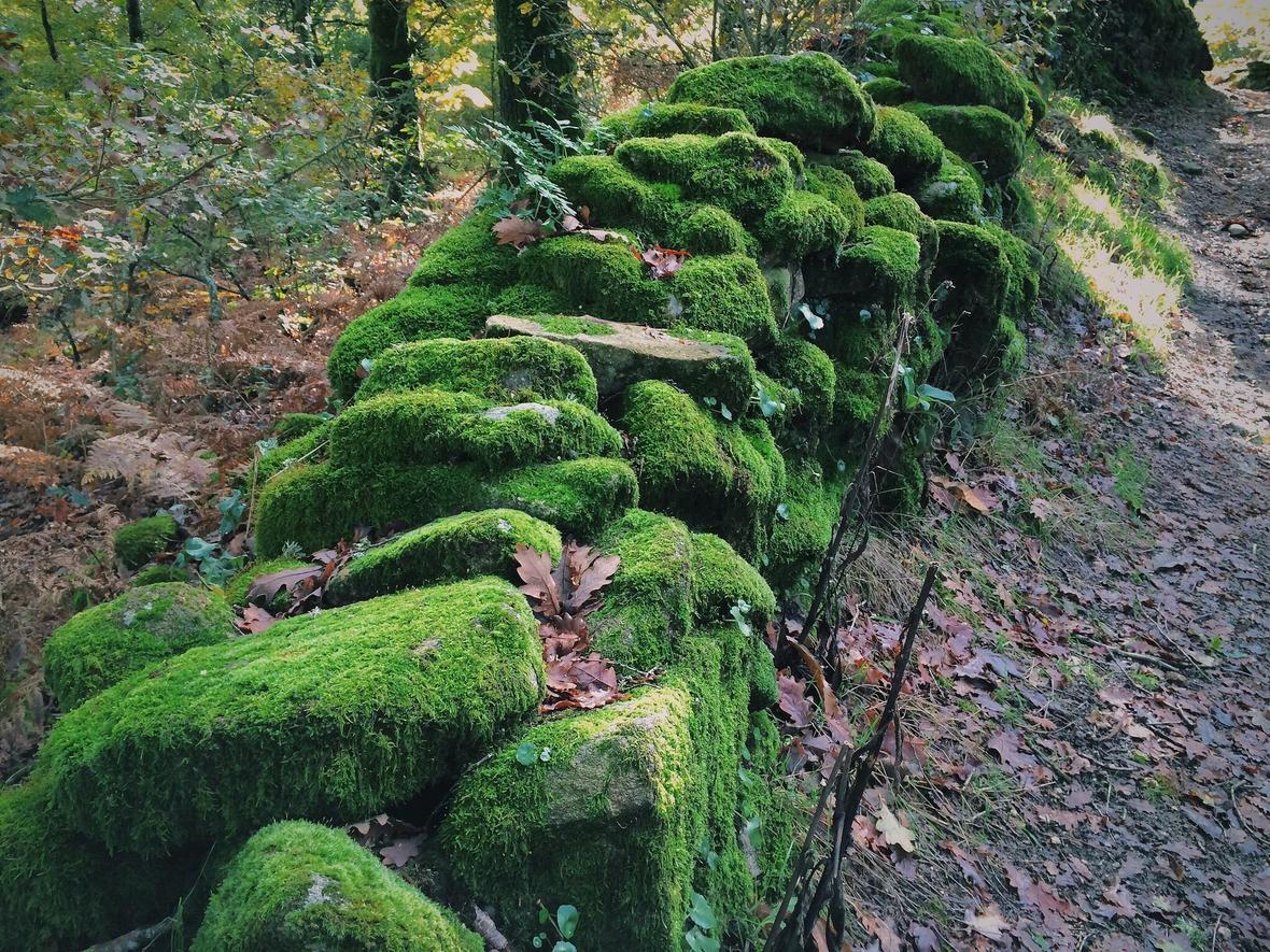 craic-moss-wall