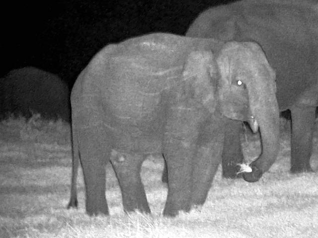 Elephant Night observation3