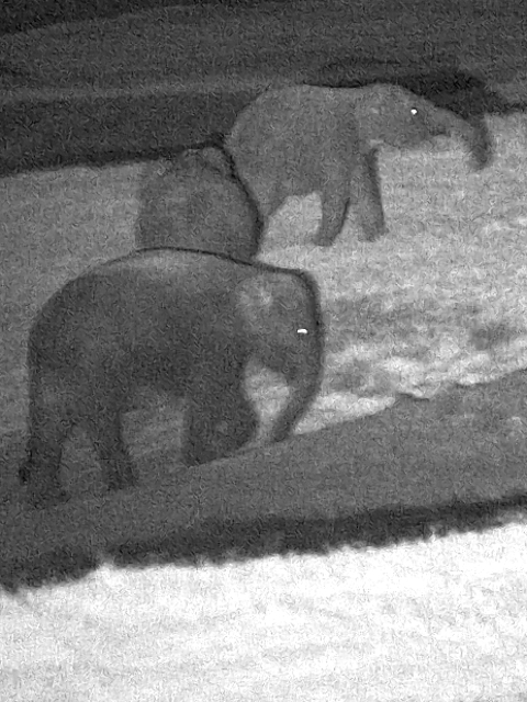 Elephant Night observation