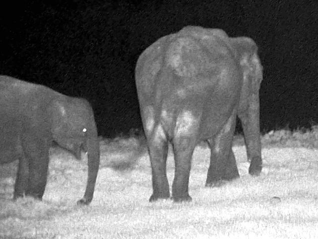 Elephant Night observation2