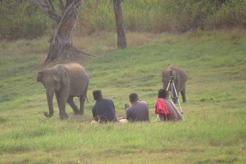 Studying elephant behaviour without disturbing them