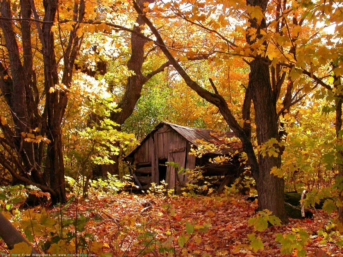 www.PicsDesktop.com 54
