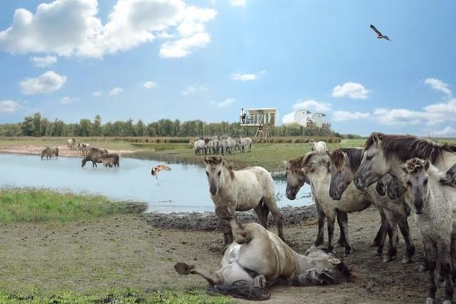 Krugerpark2 HH