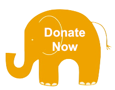 ele drawing Donate Now