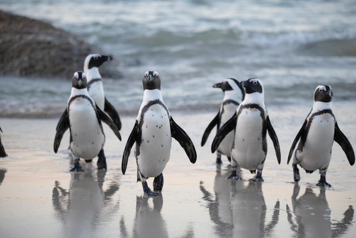 flock-of-penguins-near-sea-1299391
