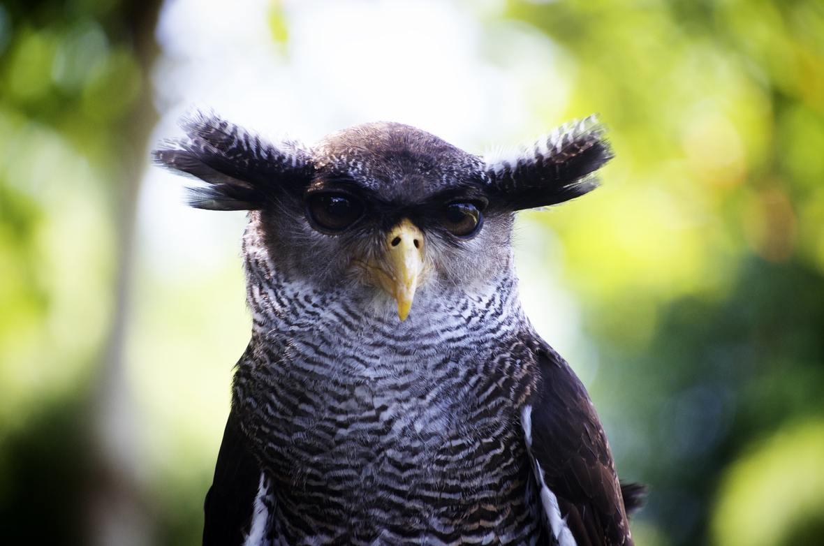 nature-bird-head-owl-33082-2