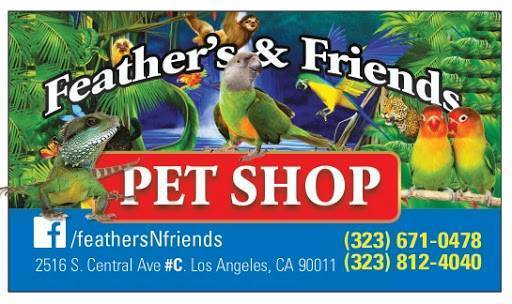 Feather s and Friends ad
