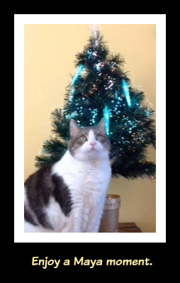 Christmas Cat-A