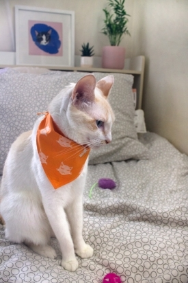 Oh-Meow-Cat-Bandana-3-275x412