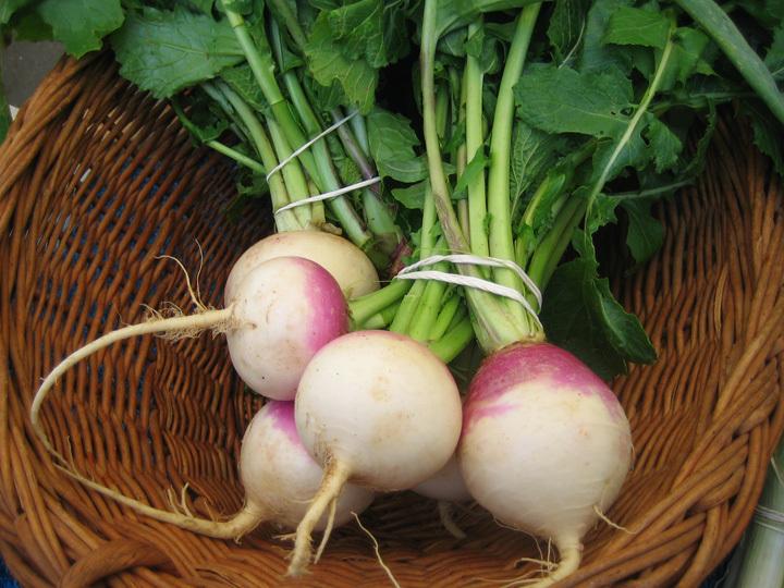 turnips small