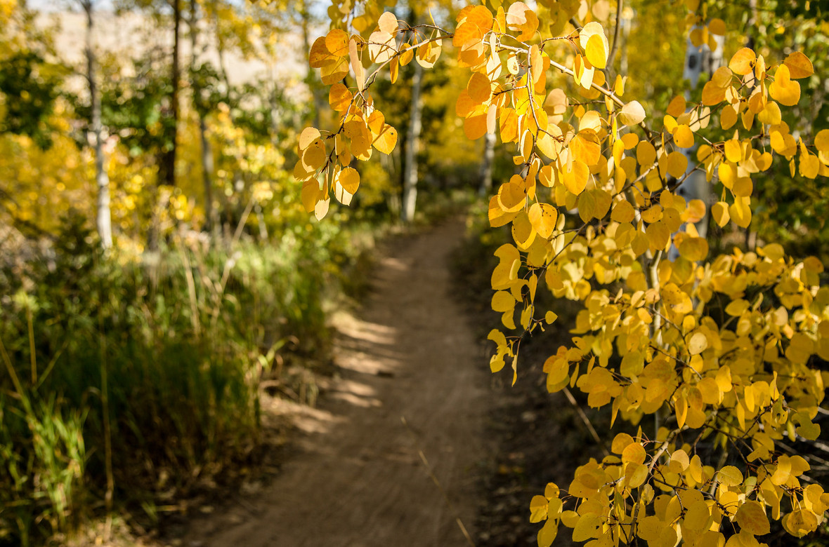 Empty Trail in Granby