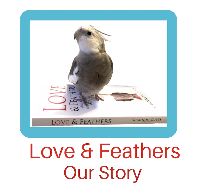 LoveFeathersTrailerImage