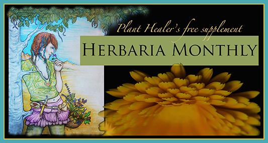 Herbaria Banner 3