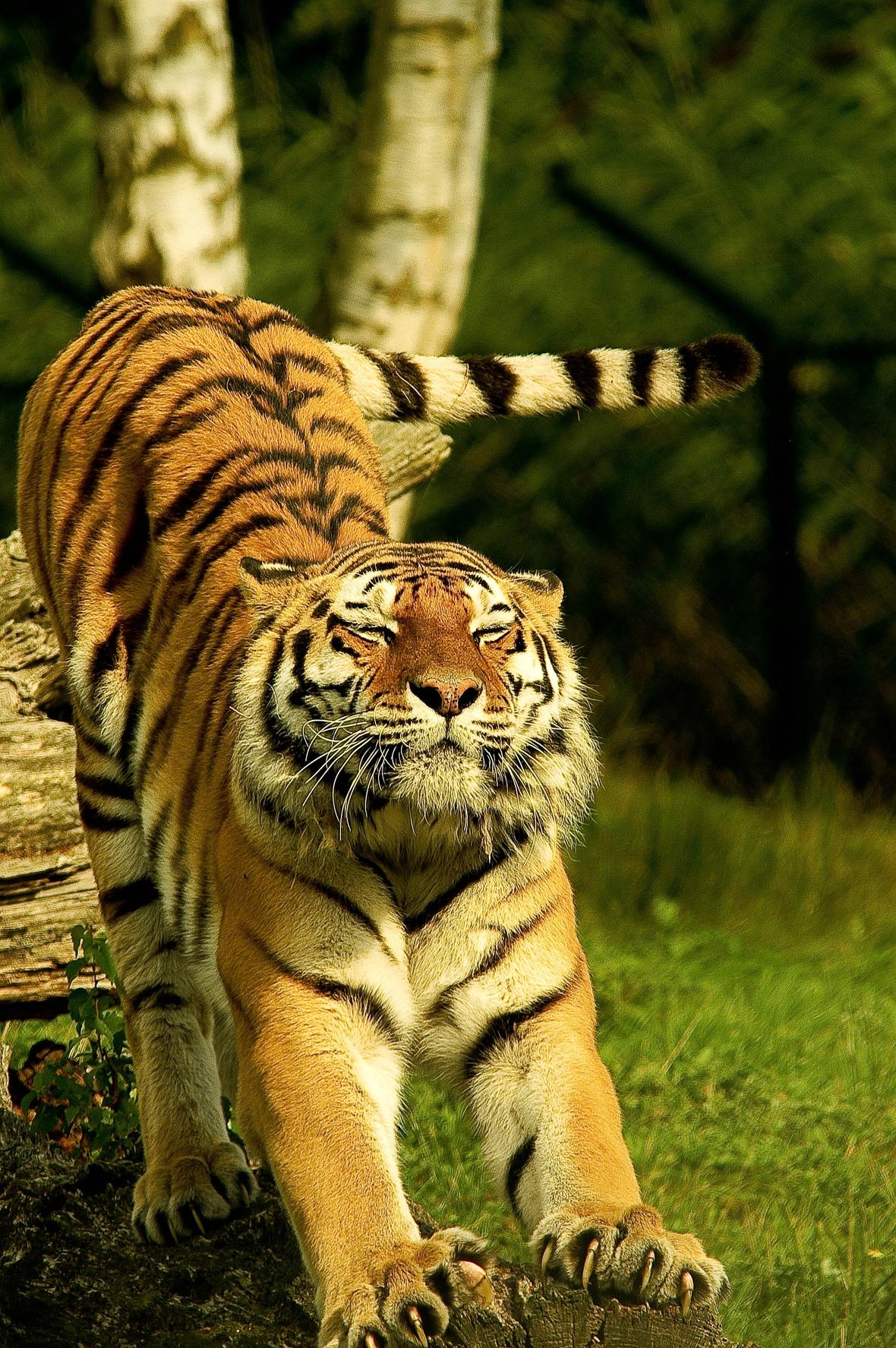 animal-animal-photography-big-big-cat-572861