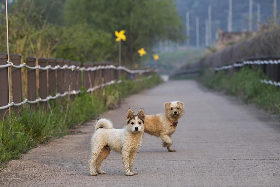 animals-canine-couple-daylight-416204