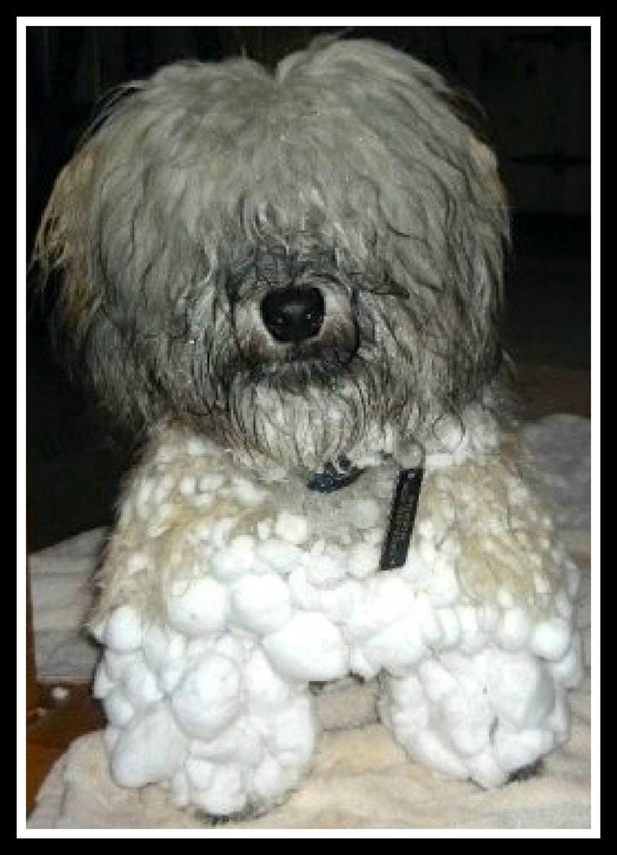 Pilgrim in Snow-A