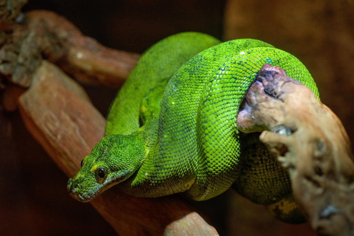 animal-zoo-green-predator-9199