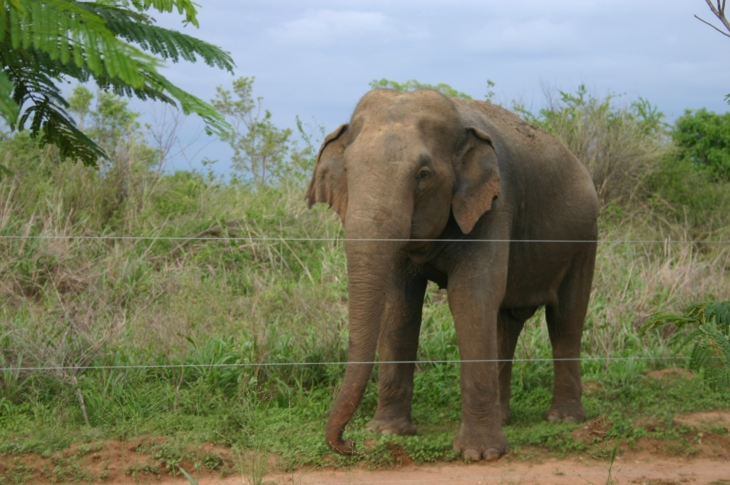 Ws-Har-FM-Elephant  1