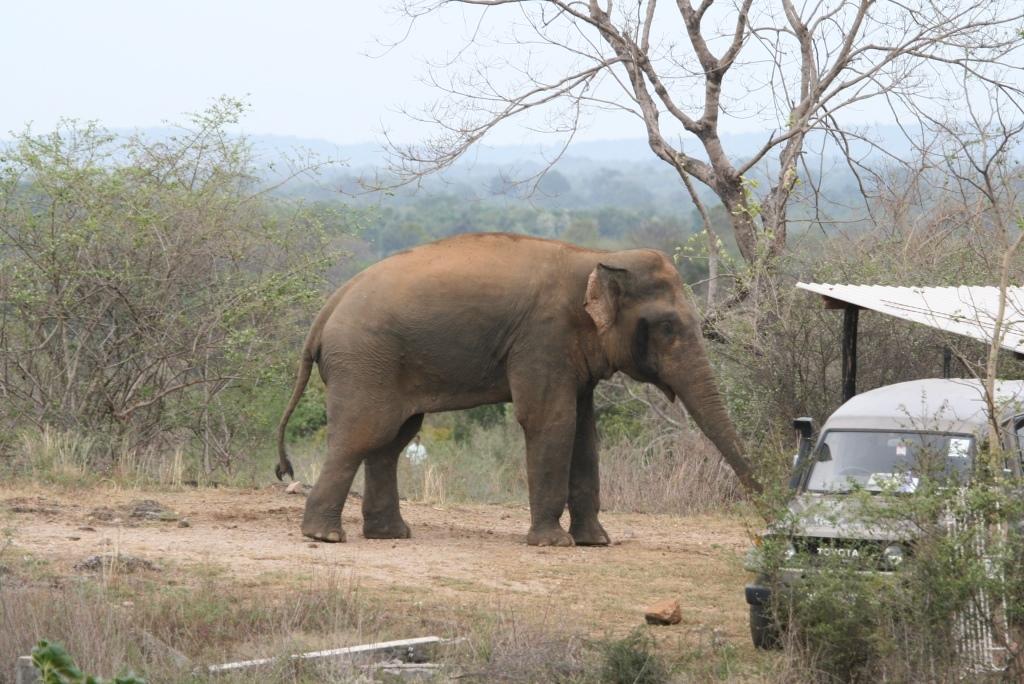 18.05.2007 Wg elephant Project house  24