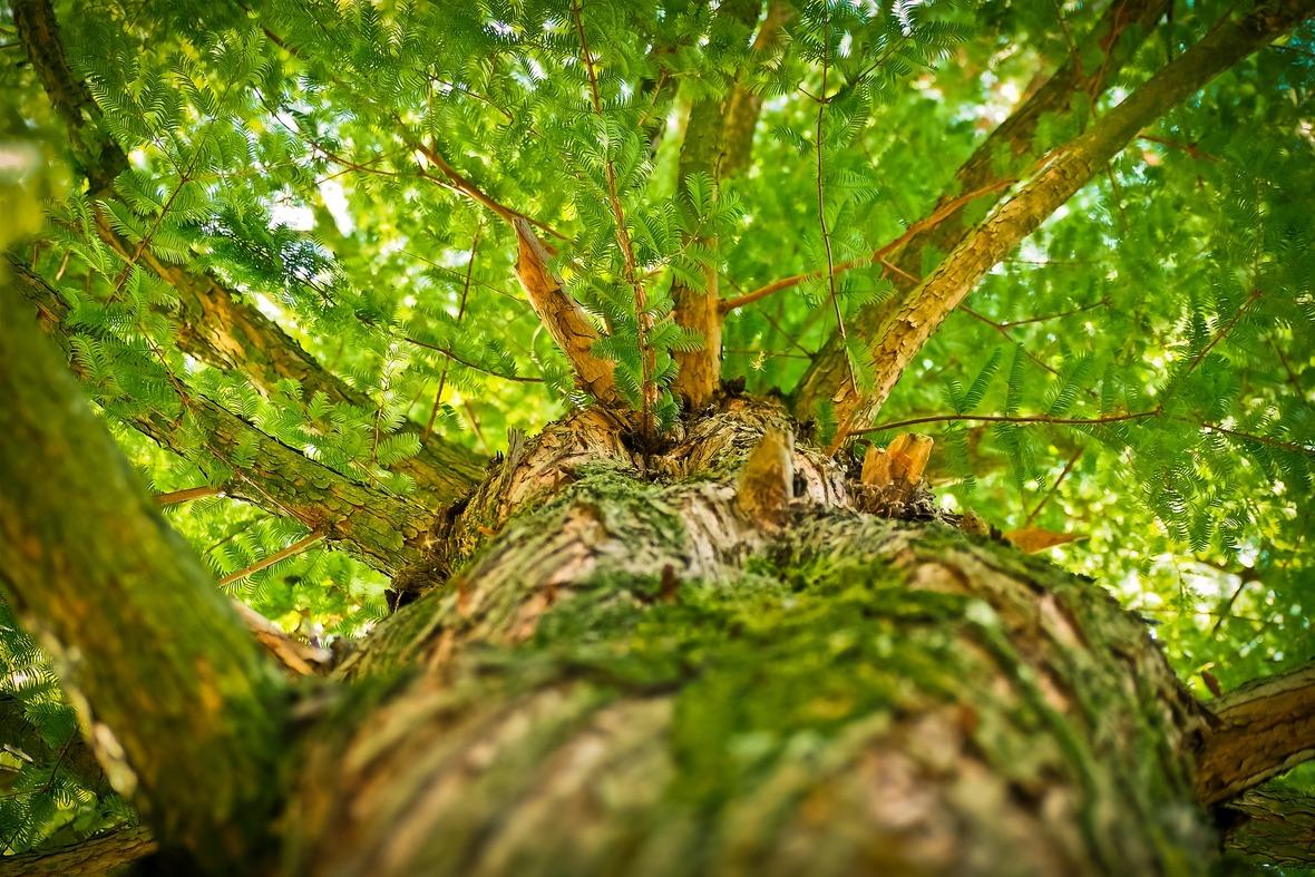 tree-1750784 1920