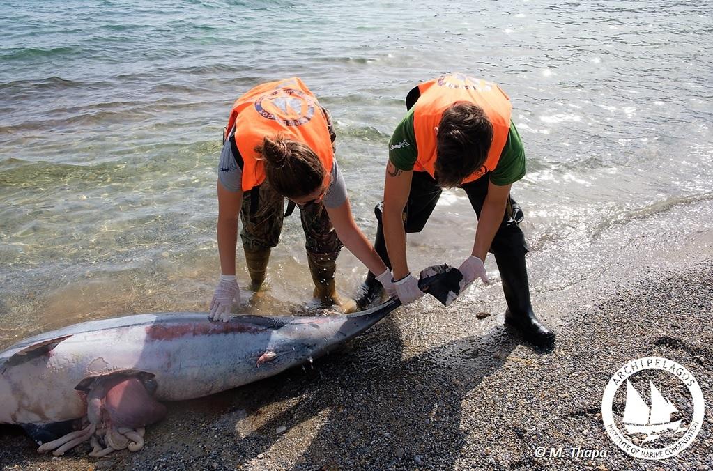 Killed Dolphin Archipelagos1