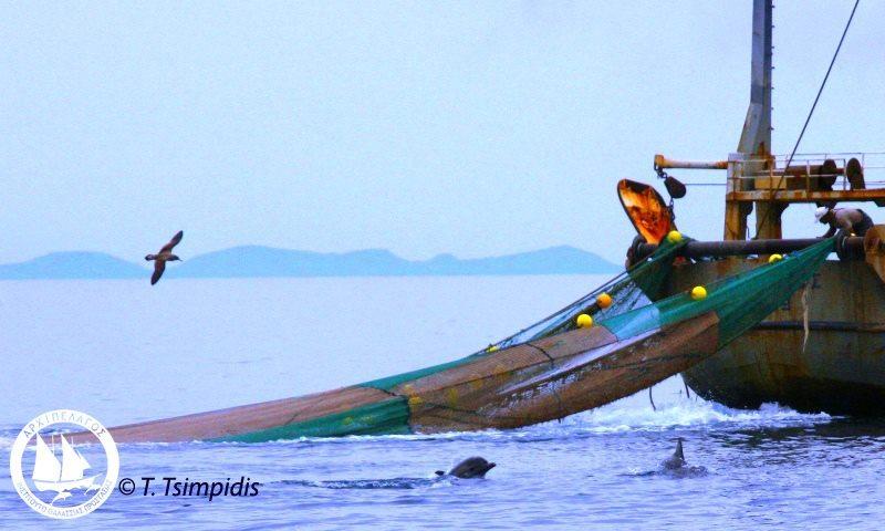dolphin trawler