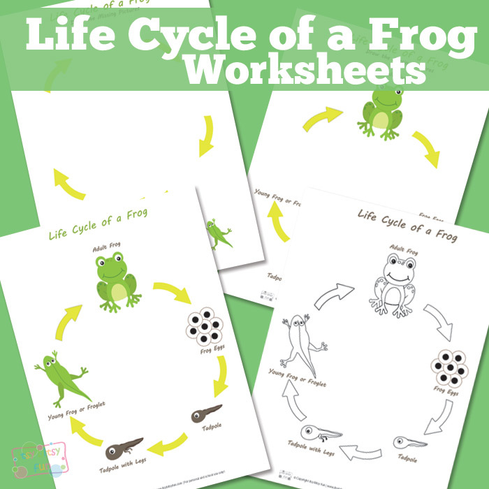 Easter Color By Number Life Cycle Of A Frog Spring Fun