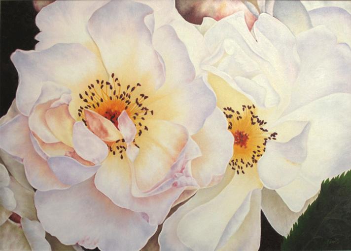 White Roses XLG
