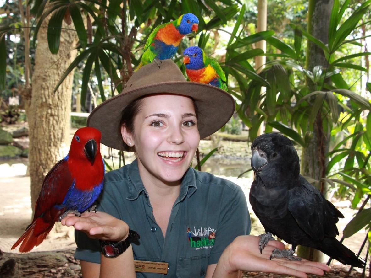 Courtney Birds