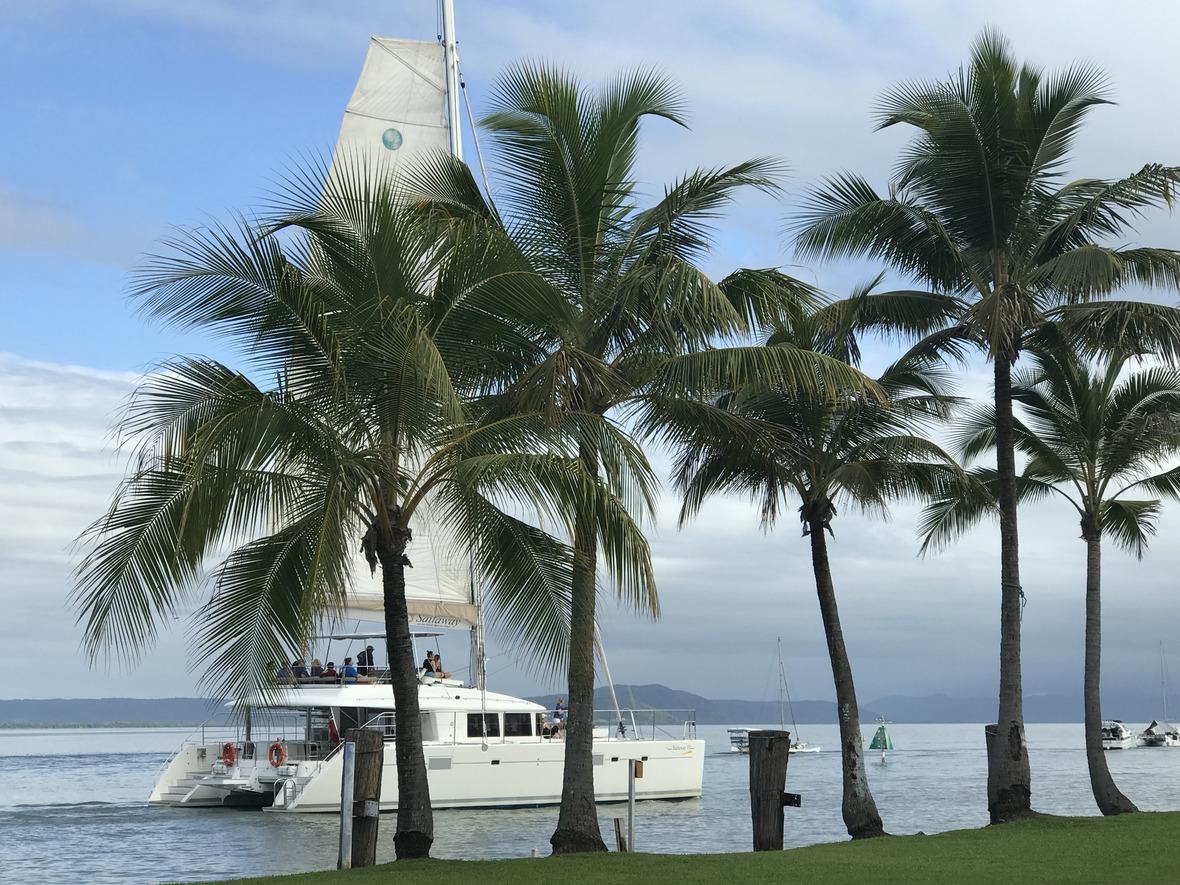 Sailaway Tropical Palms