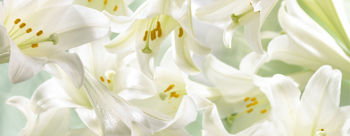Easter-Lily-Banner