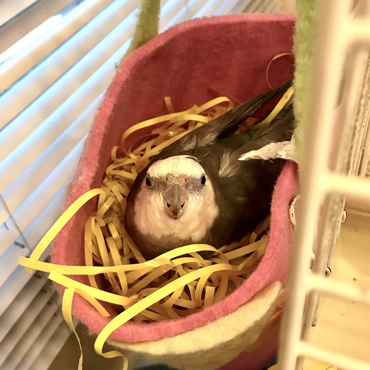 NestingSeason