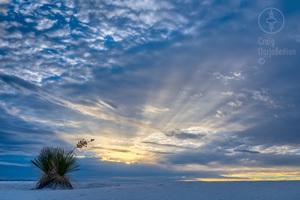 Sunrise-Yucca-300