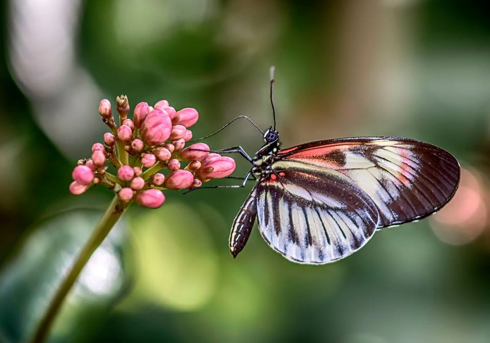 H.BlumLightButterfly