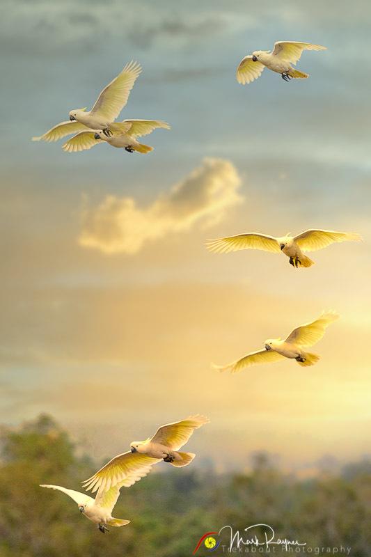 Wildlife Birds Landscape Outback Queensland-1-38