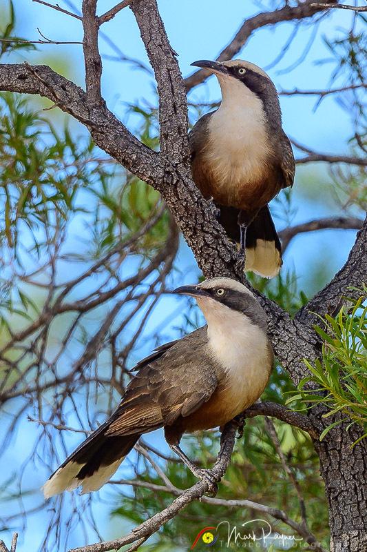Wildlife Birds Landscape Outback Queensland-1-36