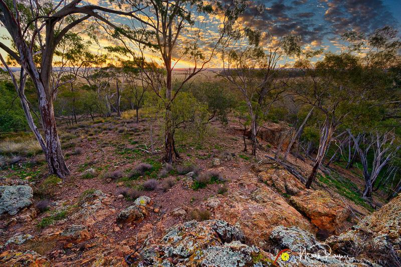 Wildlife Birds Landscape Outback Queensland-1-19