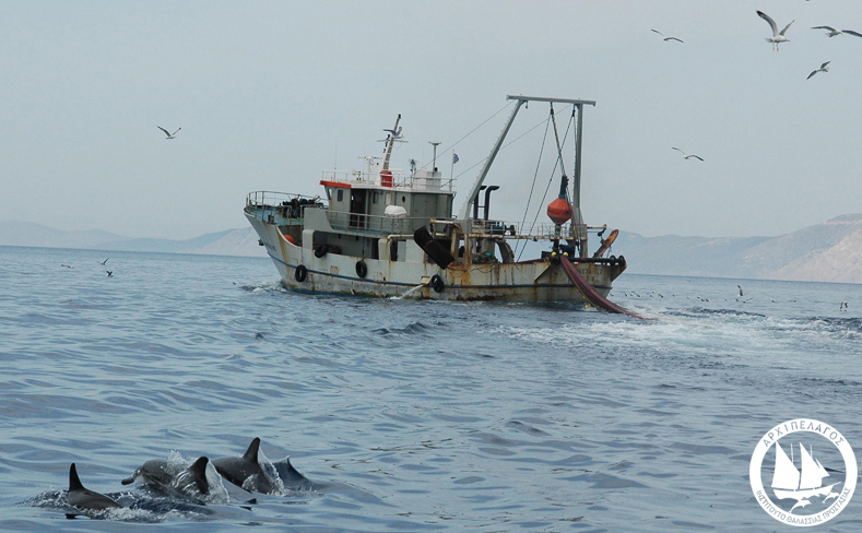 Trawler Common-dolphins