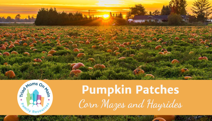pumpkinpatch 1